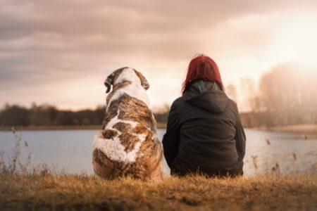 犬と人の背中